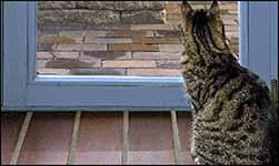 Zugluft Katze am Fenster